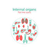 Plan linje symbolsuppsättning av inre organ Royaltyfria Bilder