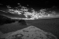 plan mesquitesand för dyner Arkivfoton