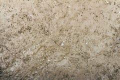 Plan och slät uttorkning för smuts efter regn Royaltyfria Foton