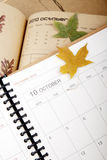 Plan in October. And the autumn leaves beginning to fall Royalty Free Stock Image