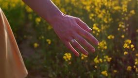 Plan rapproché émouvant de fleurs de la main de la femme Tir de chariot banque de vidéos
