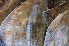 Plan rapproché abstrait des poissons frais Photo stock