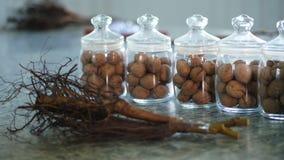 Plan rapproché, actions de noix, jeunes plantes de noix avec le système de racine stockées dans des pots en verre sont des graine banque de vidéos