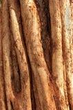 Plan rapproché africain de tronc d'arbre Images libres de droits