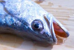 Plan rapproché argenté de tête de truite de mer affichant des dents Images stock