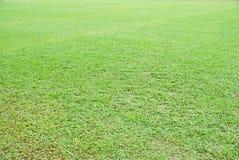 Plan rapproché asiatique naturel d'herbe verte d'Overecposed pendant le matin image libre de droits