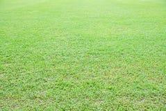 Plan rapproché asiatique naturel d'herbe verte d'Overecposed pendant le matin avec le fond blured de bokeh images libres de droits