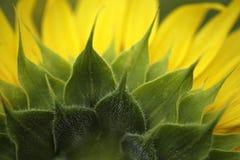 Plan rapproché avec les feuilles vertes Image libre de droits