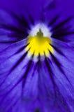 Plan rapproché bleu de fleur Photos stock