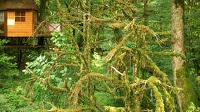 Plan rapproché, branches des arbres couverts de la mousse For?t mystique banque de vidéos
