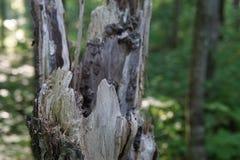 Plan rapproché cassé d'arbre photographie stock libre de droits