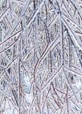 Plan rapproché congelé de branches photo stock
