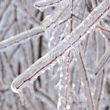 Plan rapproché congelé de branches d'arbre image libre de droits