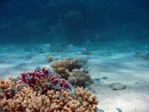 Plan rapproché coral2 Photos stock