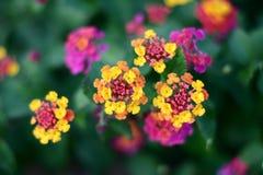 Plan rapproché corse de fleur Images libres de droits