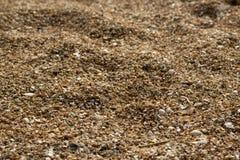 Plan rapproché d'à sable jaune sur la plage Photographie stock libre de droits