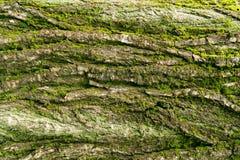 plan rapproché d'écorce d'arbre, écorce d'arbre couverte de mousse photographie stock libre de droits