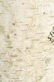 Plan rapproché d'écorce de bouleau Photo libre de droits