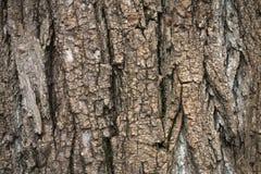 Plan rapproché d'écorce sur un vieil arbre photo libre de droits
