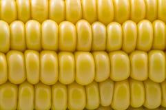 Plan rapproché d'épi de maïs Image libre de droits