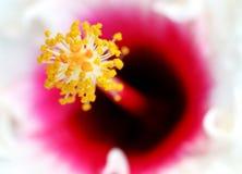 Plan rapproché d'étamine de fleur   Photo stock