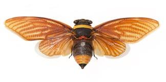 Plan rapproché d'abeille froTaiwan photo libre de droits