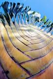 Plan rapproché d'angle faible de palmier Photos stock