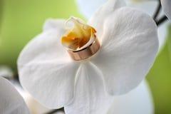Plan rapproché d'anneau de mariage Images stock
