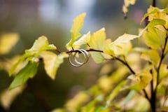 Plan rapproché d'anneaux de mariage Photographie stock