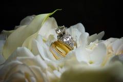 Plan rapproché d'anneaux de mariage sur la rose de blanc Images libres de droits