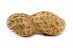 Plan rapproché d'arachide. Image libre de droits