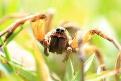 Plan rapproché d'araignée photo libre de droits