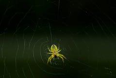 Plan rapproché d'araignée Images libres de droits