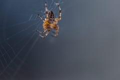 Plan rapproché d'araignée Photographie stock libre de droits