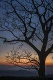 Plan rapproché d'arbre contre un lever de soleil de montagne Images libres de droits