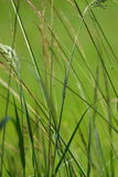 Plan rapproché d'herbe Image stock