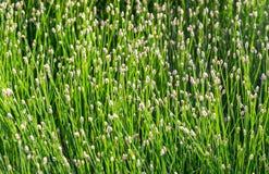 Plan rapproché d'herbe dans une compteur-lumière comme fond Photo stock