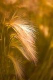 Plan rapproché d'herbe de prairie Photo stock