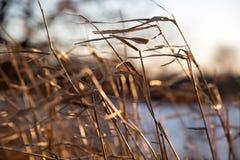 Plan rapproché d'herbe de prairie soufflant en vent avec le foyer mou Photos stock