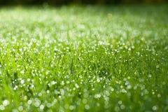 Plan rapproché d'herbe humide verte Photo libre de droits