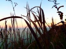 Plan rapproché d'herbe sèche et de wildflowers soufflant en vent donnant sur le lac Michigan dans la chute Image stock