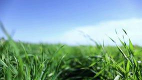 Plan rapproché d'herbe verte L'appareil-photo se déplace par l'herbe banque de vidéos
