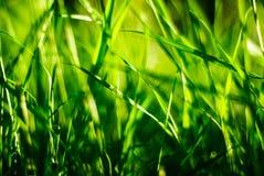 Plan rapproché d'herbe verte un jour ensoleillé Photo stock
