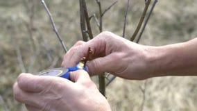 Plan rapproch? d'homme d'agriculteur greffant implantant un arbre banque de vidéos