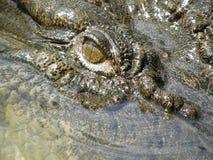 Plan rapproché d'oeil de crocodile Photos libres de droits