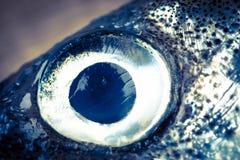 Plan rapproché d'oeil de poissons d'éperlan Photos stock
