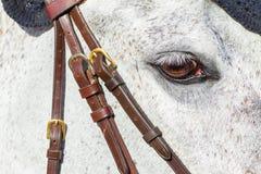 Plan rapproché d'oeil de tête de cheval Photographie stock libre de droits