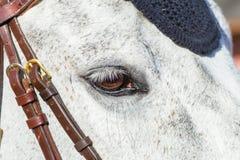 Plan rapproché d'oeil de tête de cheval Image stock