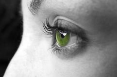 Plan rapproché d'oeil vert Image stock