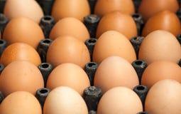 Plan rapproché d'oeufs bruns de poulet Images libres de droits